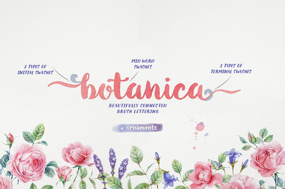 Botanica Brush Font Family Download