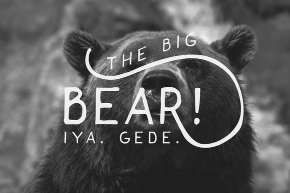 bear-f