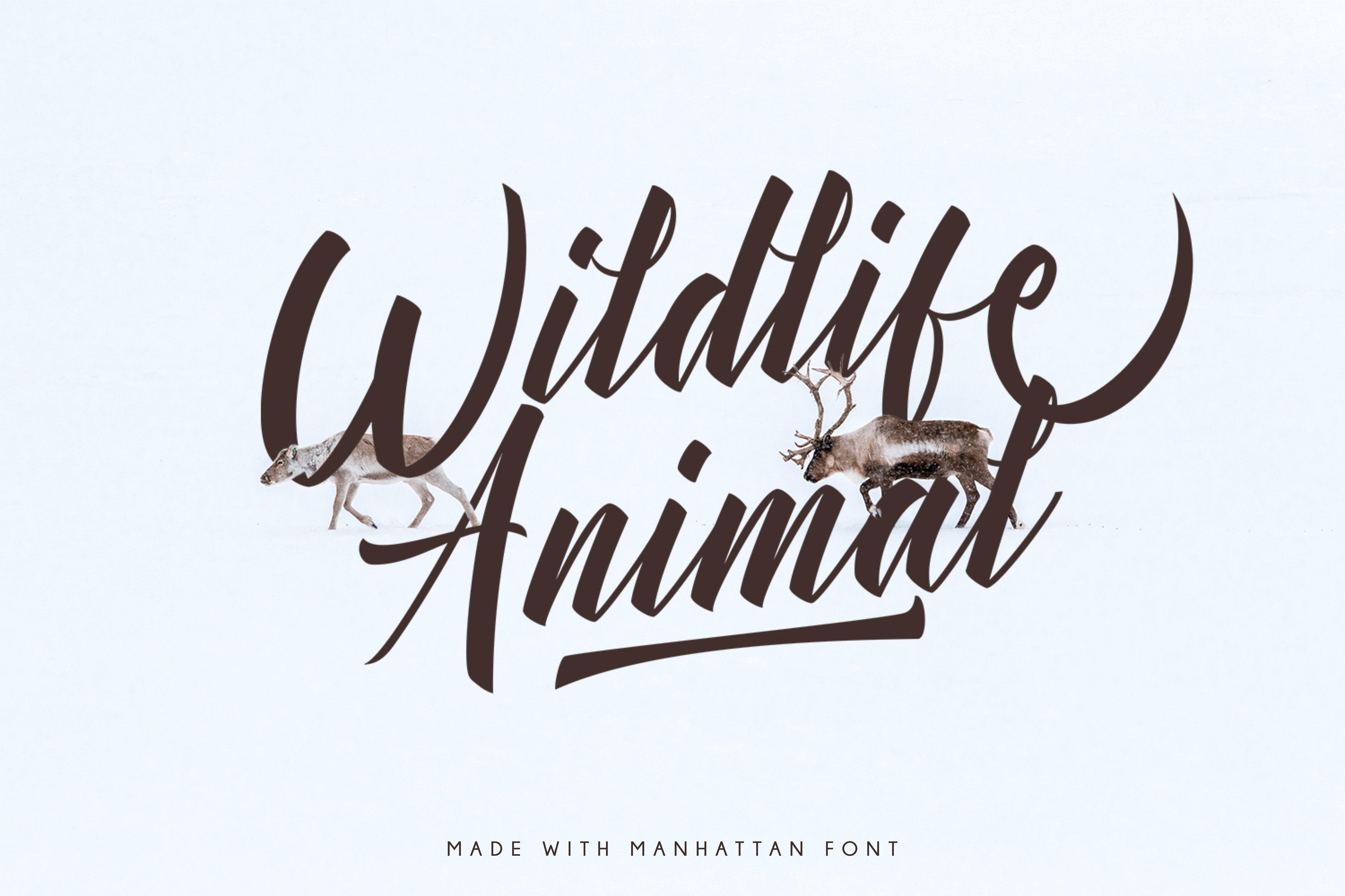 Manhattan Script Font