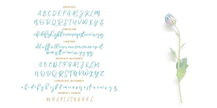 Nermola Script Font
