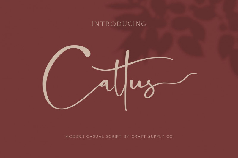 Cattus Script Font