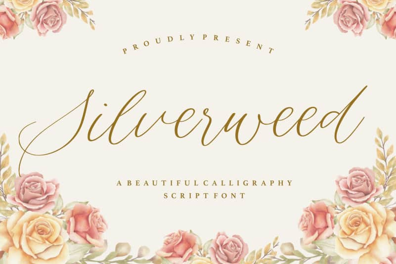 Silverweed Calligraphy Script Font